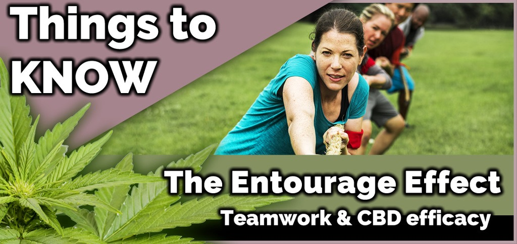 Boost The Efficacy of CBD with the Entourage Effect
