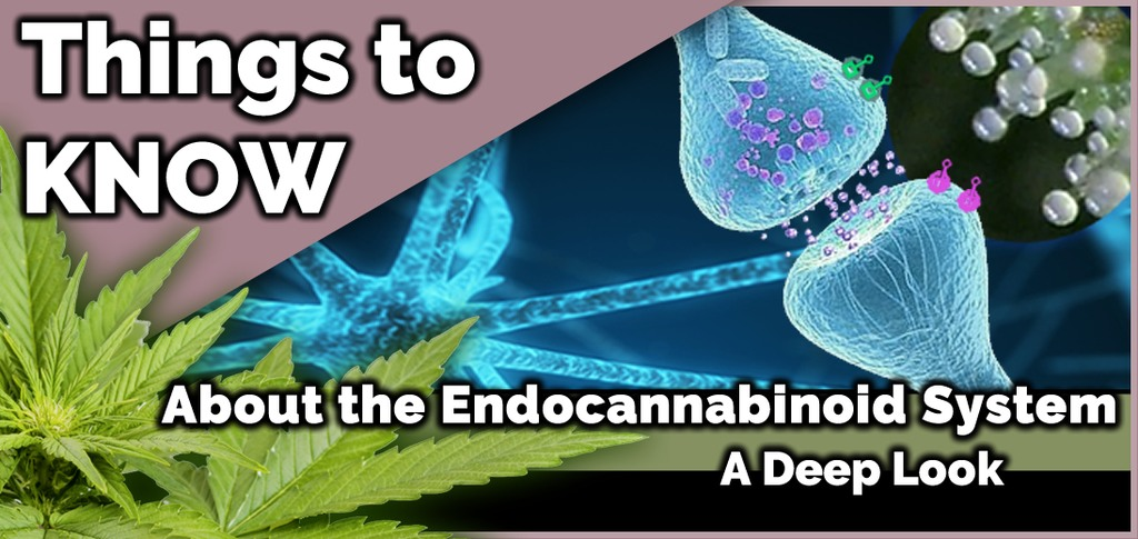 when was the endocannabinoid system discovered